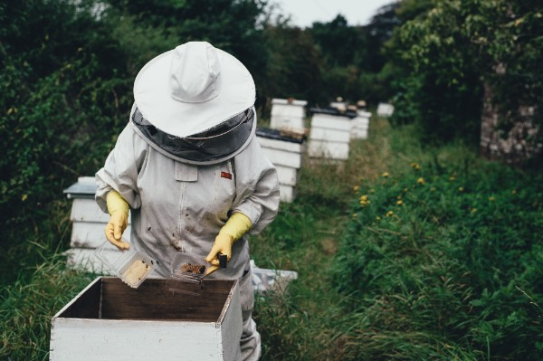 beekeeper to protect bees